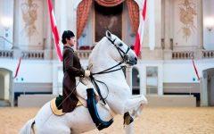 Spanish Riding School recceives UNESCO Award