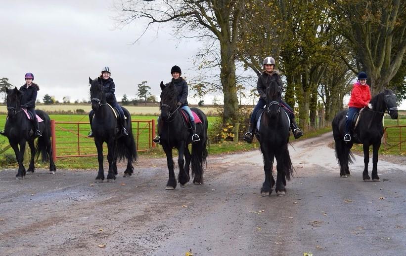 Enjoying a ride on these stunning Friesian Horses